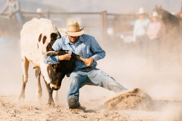 steer wrestling - rodeo stock pictures, royalty-free photos & images