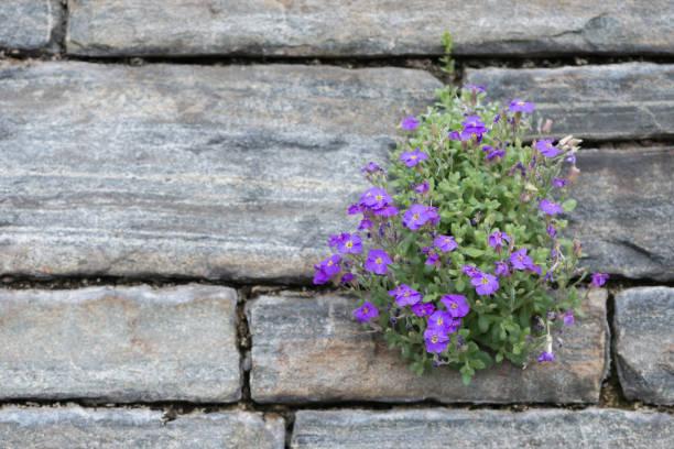 steinermauer mit blumen - steine für gartenmauer stock-fotos und bilder