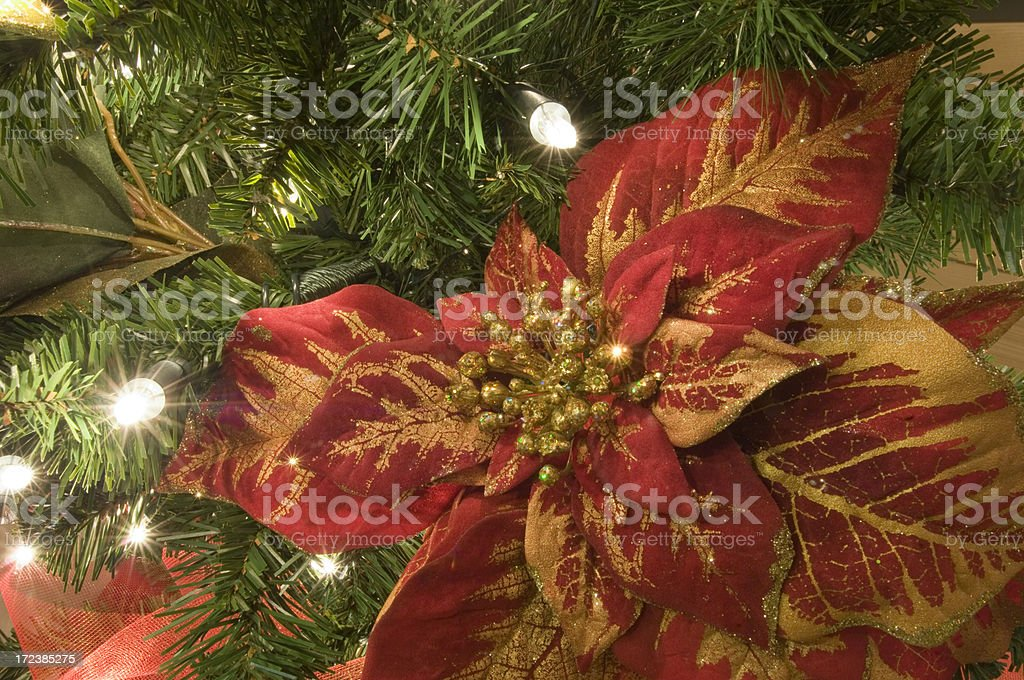 Stella di Natale royalty-free stock photo