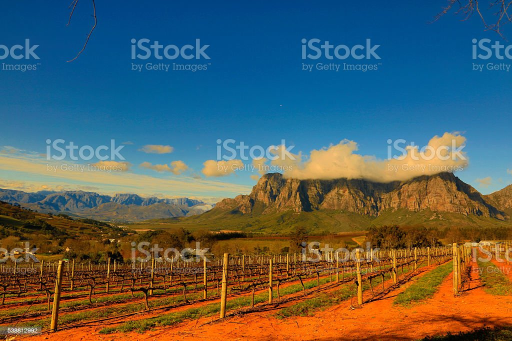 Stellenbosch is South Africa€™s wine and gourmet capital Stellenbosch is South Africa€™s wine and gourmet capital and it is South Africa€™s second oldest town. Theres many vineyards farms around the town producing quality wines. Africa Stock Photo