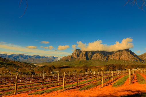 Stellenbosch Is South Africas Wine And Gourmet Capital Stock Photo - Download Image Now