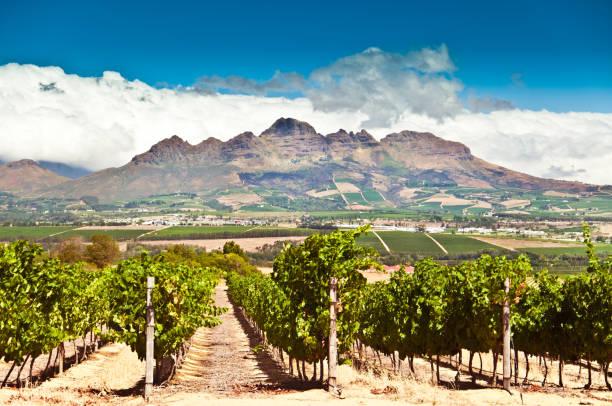 Stellenbosch viñedos - foto de stock