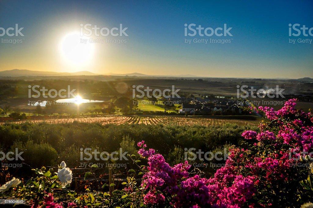 Stellenbosch wine farm stock photo