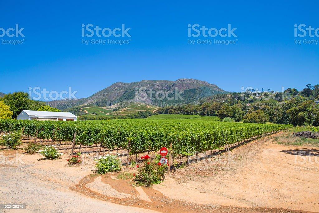 Stellenbosch Winery - Cape Town stock photo
