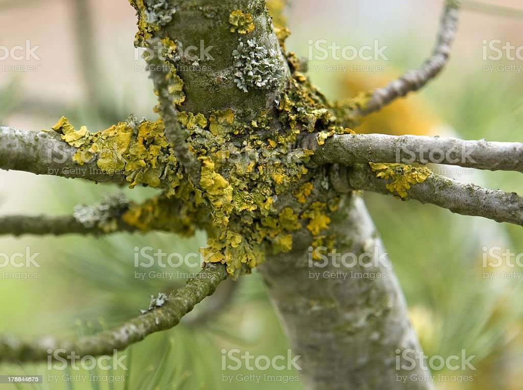 stem and lichen royalty-free stock photo