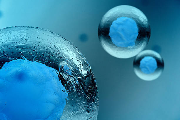 stem cell - biology stock pictures, royalty-free photos & images