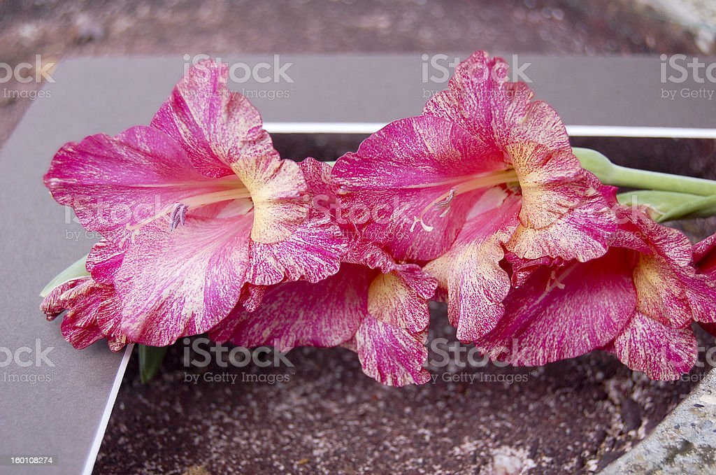 Stem of Flowers royalty-free stock photo