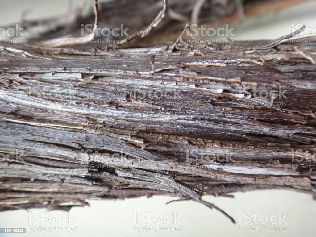 Stem of vine stock photo