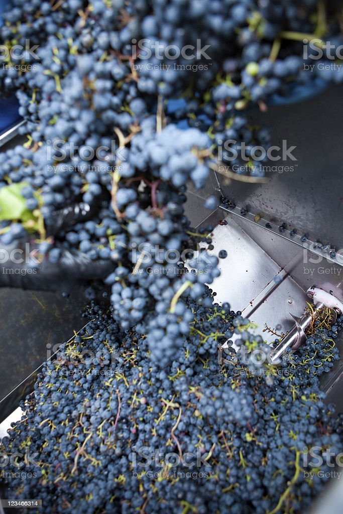 Stemmer crusher at a winery stock photo
