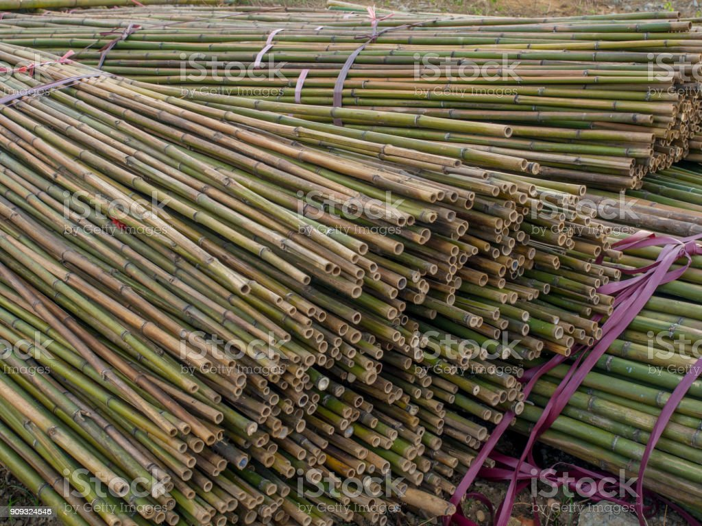 Stems of bamboo trees stock photo