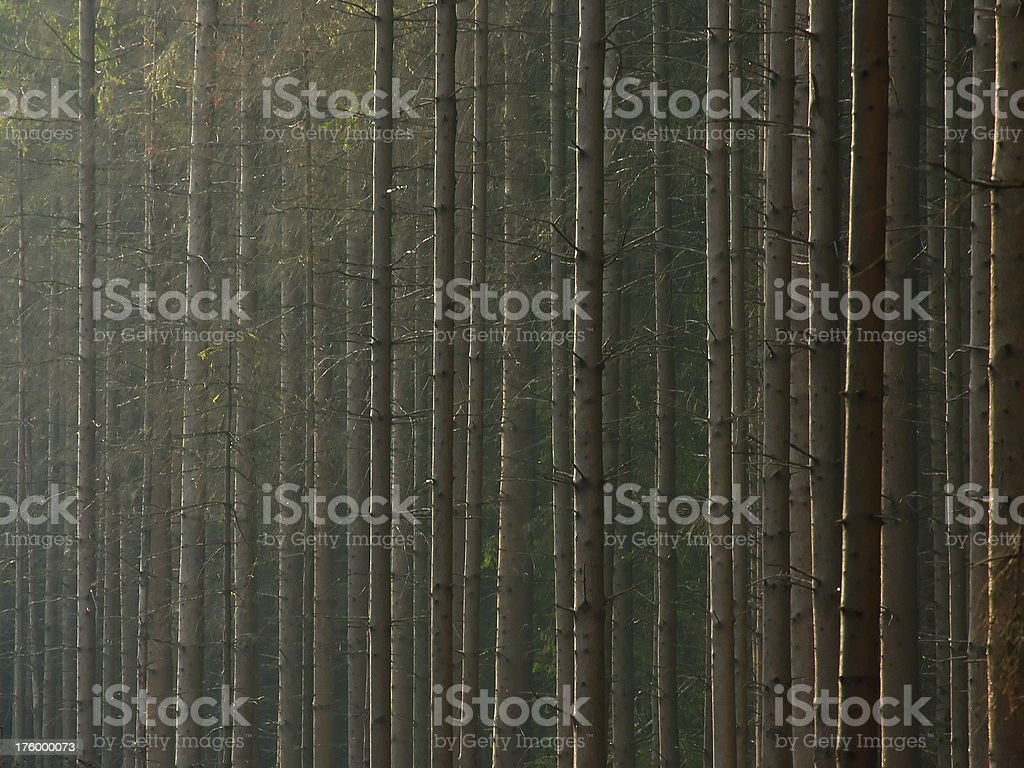 Stems royalty-free stock photo