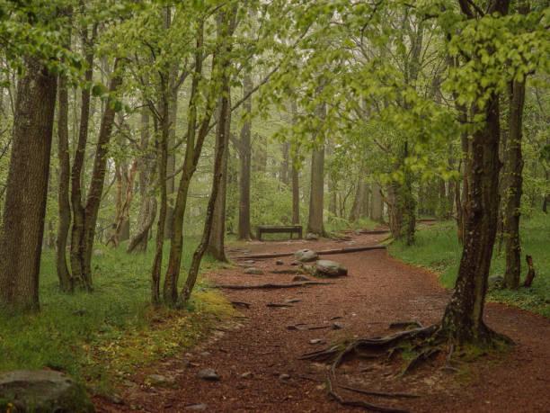 stens huvud nationalpark vackert landskap - skåne bildbanksfoton och bilder