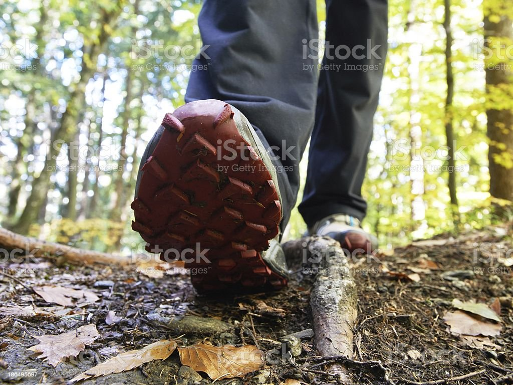 Step in autumn nature royalty-free stock photo