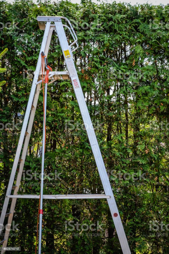 Aluminum Step ladder and trimmer in front of tall cedar hedge