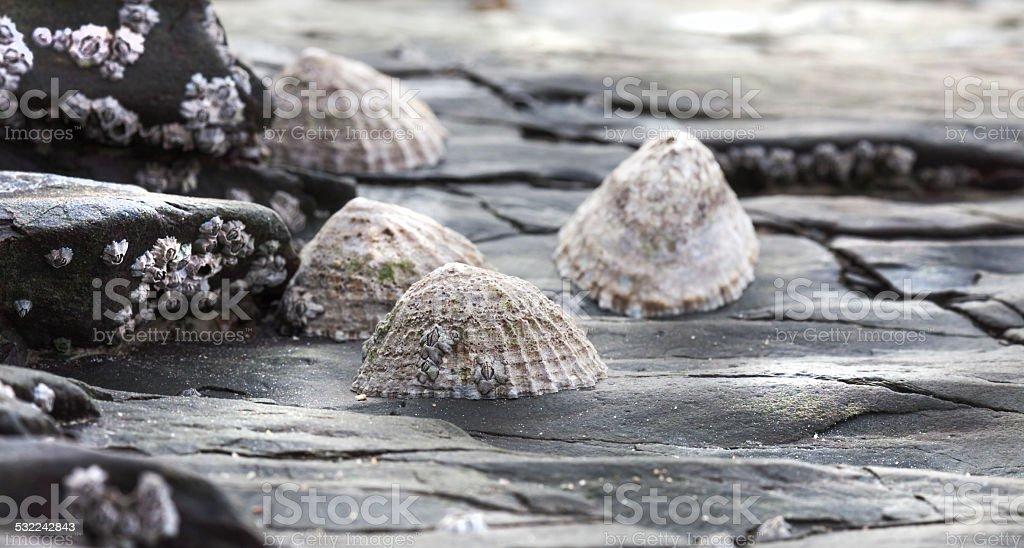 stepcones stock photo