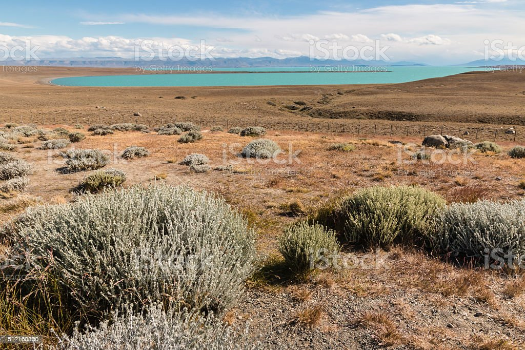 steppe around Argentino lake in Patagonia stock photo