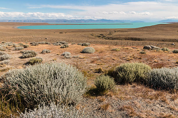 steppe around Argentino lake in Patagonia steppe around Argentino lake in Patagonia, Argentina steppe stock pictures, royalty-free photos & images