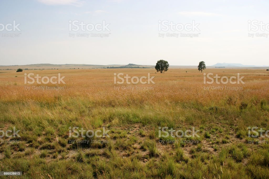 Steppe between Bloemfontein and Ladybrand, Free State, South Africa stock photo