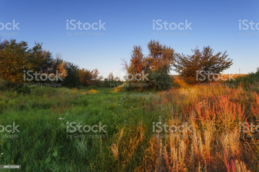 Steppe morning multicolored landscape. Trees and green grass glows in the first rays of the sun royalty-free stock photo