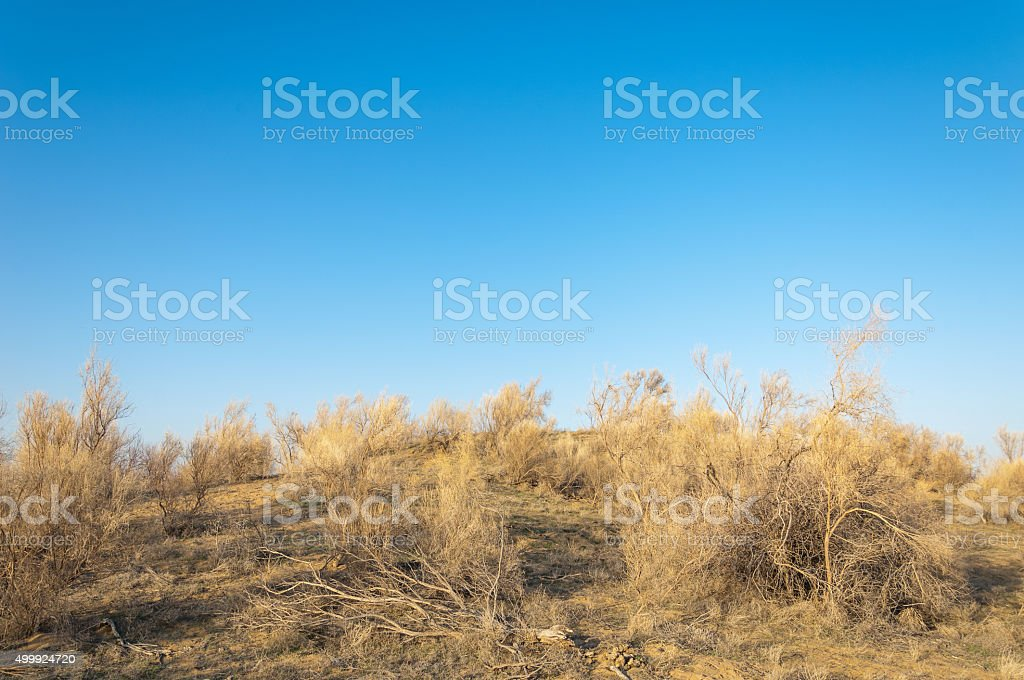 steppe stock photo