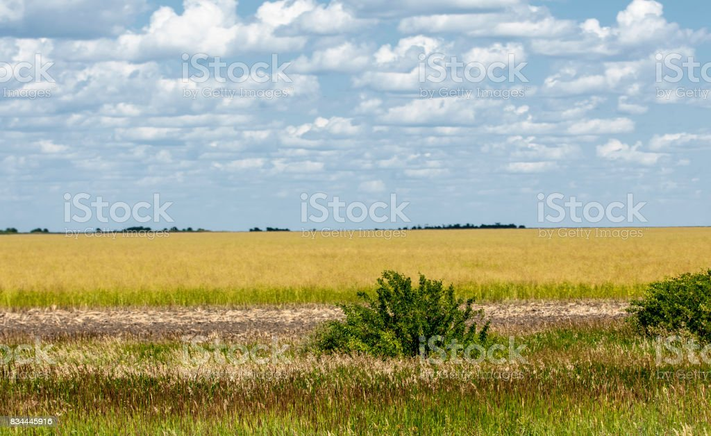 steppe, prairie, veld, veldt. stock photo