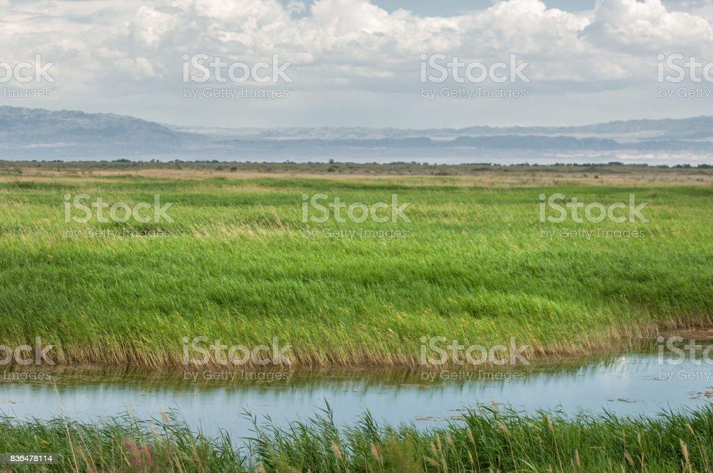 steppe, prairie, veld, veldt. stock photo