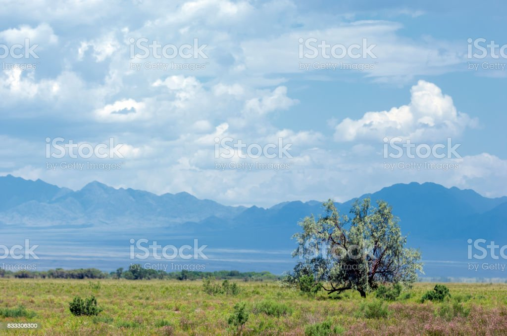steppe, prairie, veld, veldt. synonyms: plains, grasslands. open, uncultivated country or grassland stock photo