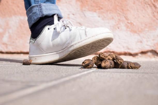 I stepped in dog shit The foot of a pedestrian about to step in doggie-do on the road - very nearly a smelly, messy accident! Make you look bad. Bad luck. Be very careful. poop stock pictures, royalty-free photos & images