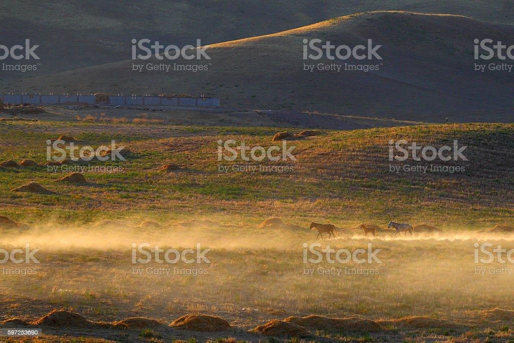 Steppe.Sunset. Caravan of horses.Kazakhstan. stock photo