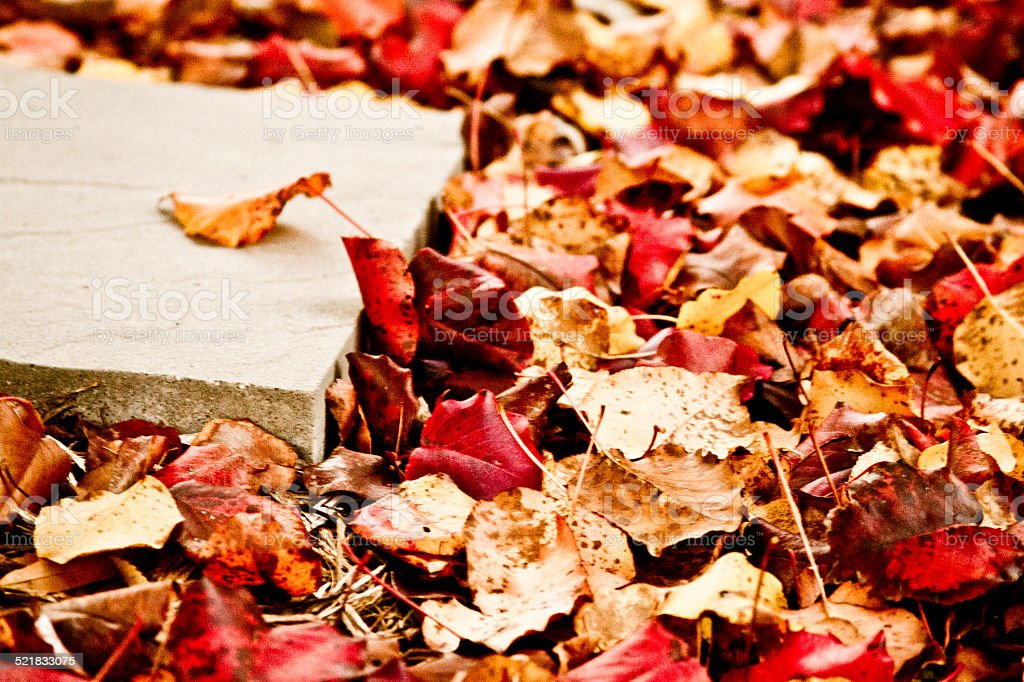 Stepping Stone in Autumn Leaves stock photo