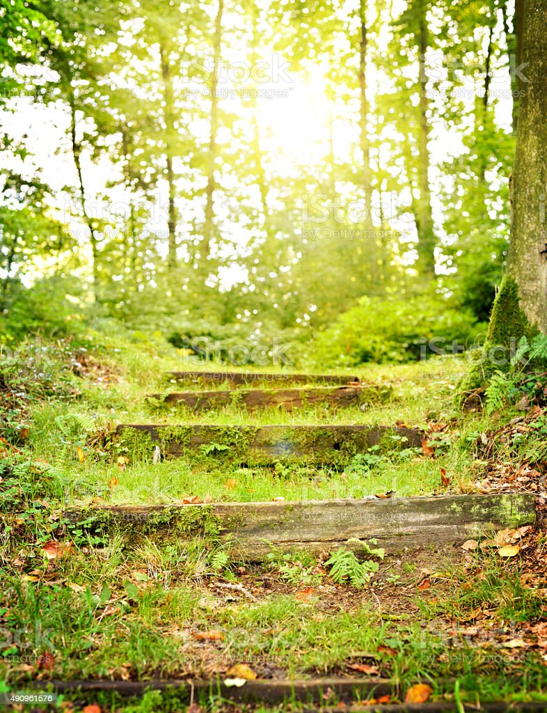 Steps In The Forest Stock Photo Download Image Now Istock