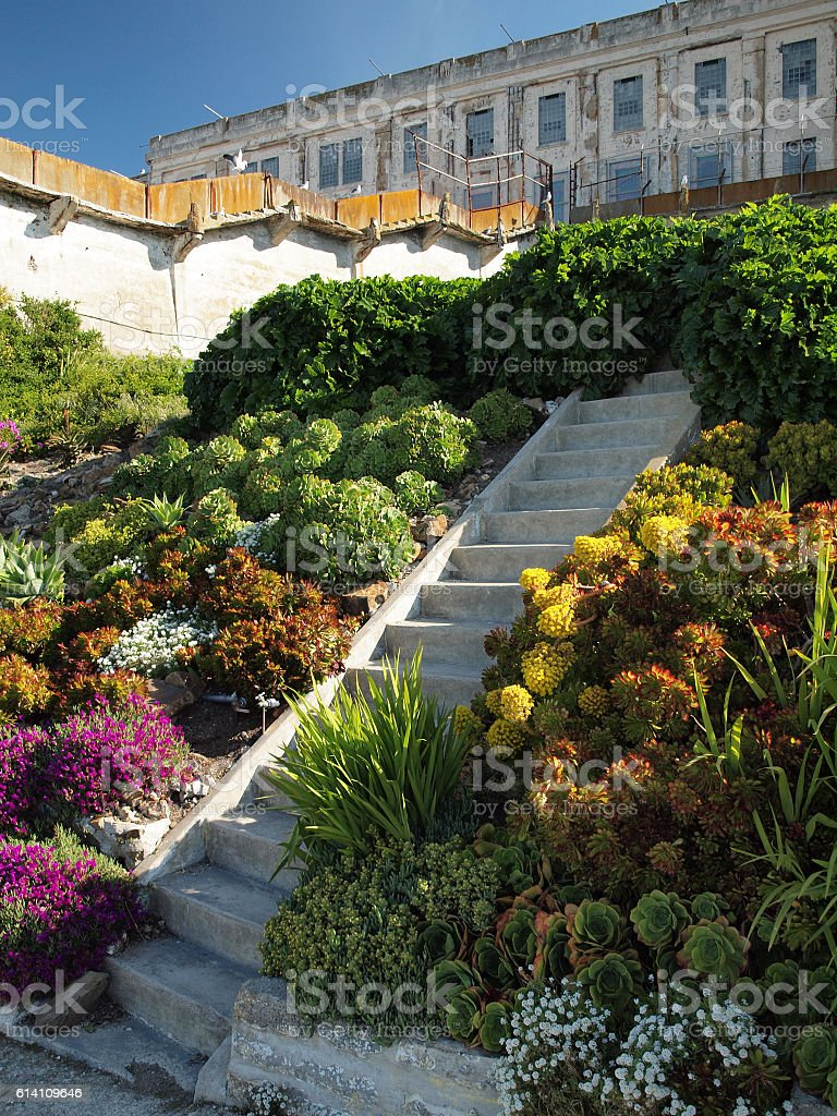 Steps up Alcatraz Garden with Prison in the background stock photo