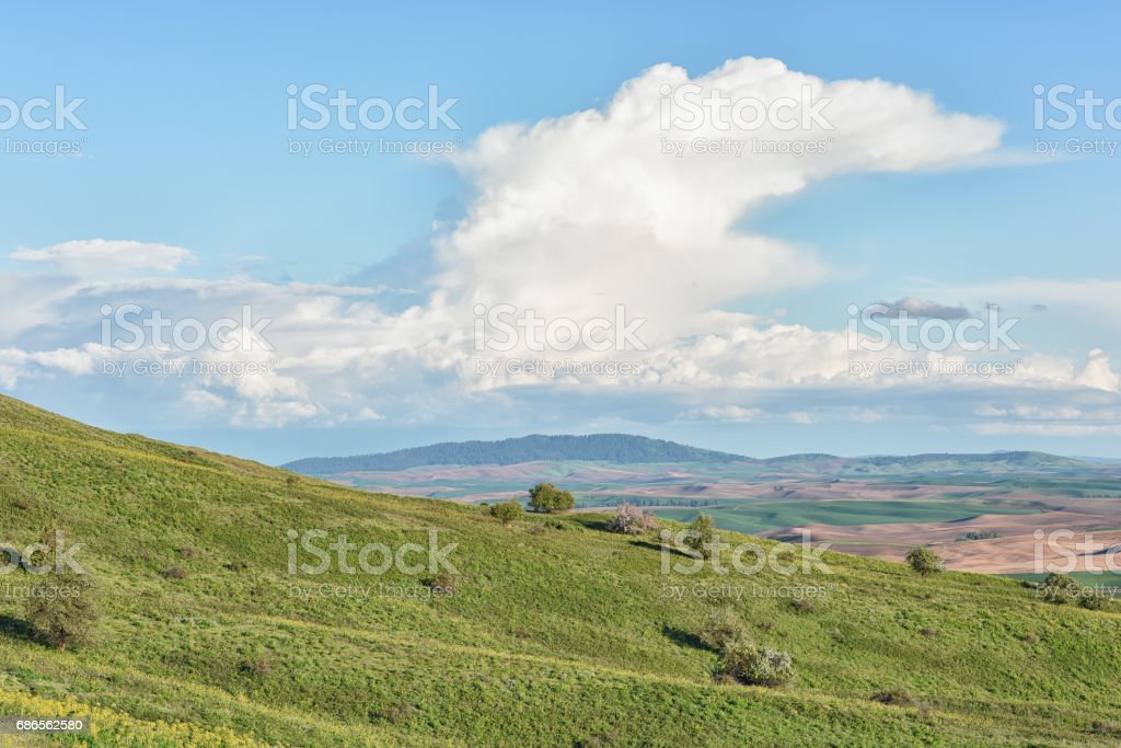 Steptoe Butte State Park royalty-free stock photo
