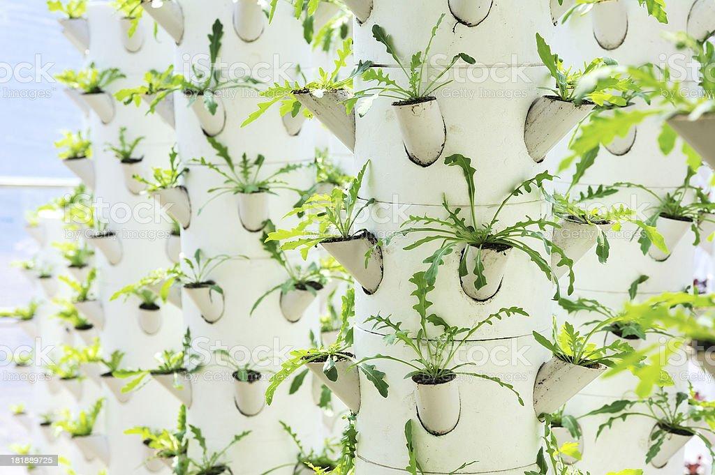 stereoscopic planting royalty-free stock photo