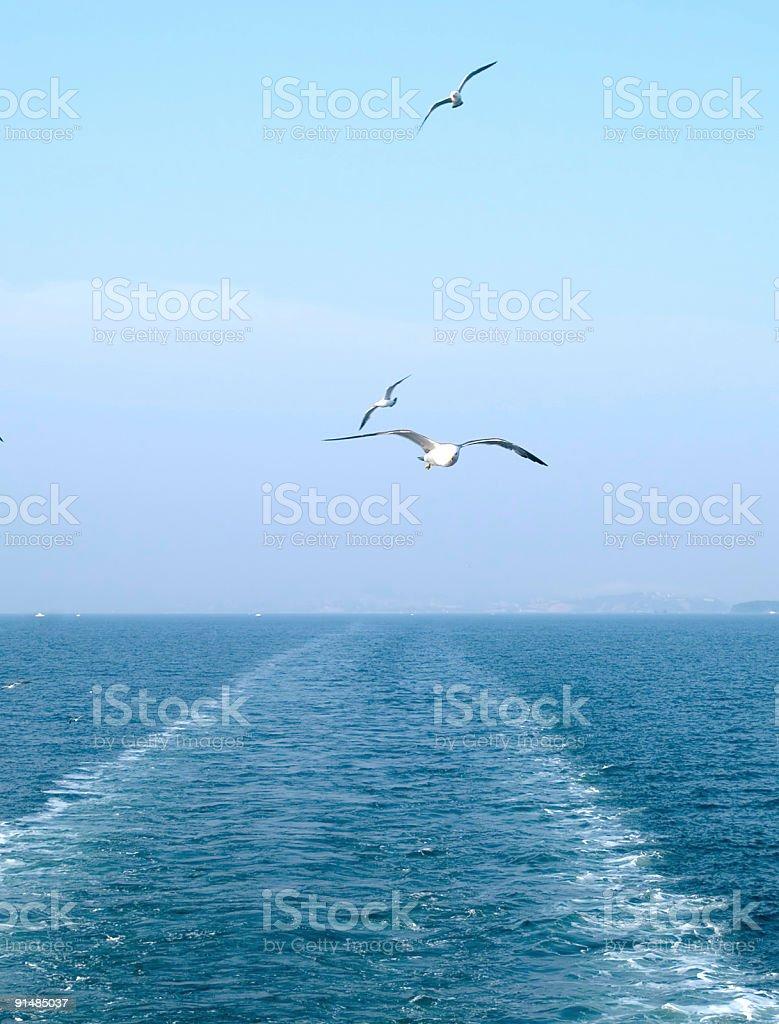 stern sea royalty-free stock photo