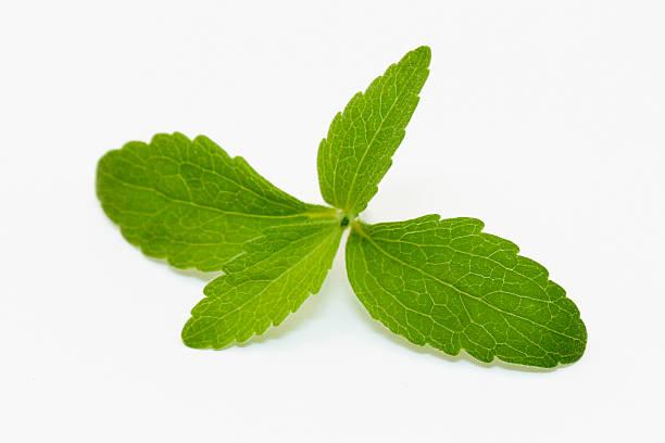 Stevia Leaves stock photo