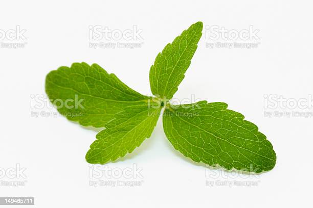 Stevia Leaves Stock Photo - Download Image Now