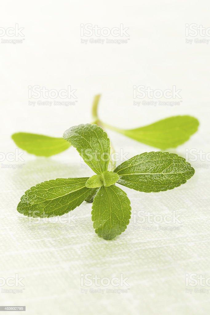 Stevia En Verde Foto de stock y más banco de imágenes de
