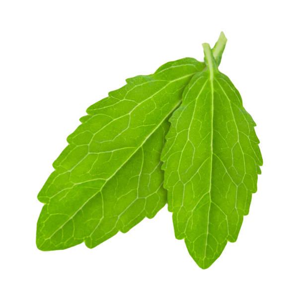 Stevia-Pflanze lässt vor weißem Hintergrund isoliert – Foto