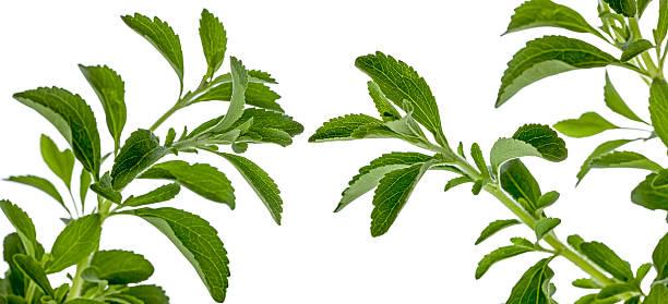 Stevia pflanzliche Süßstoff – Foto