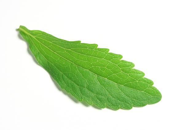 Stevia Rebaudiana Bertoni or Sweet Herb leaf stock photo