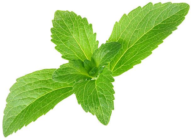 stevia rebaudiana, zuckerersatz ausschnitt - low carb süßigkeiten stock-fotos und bilder