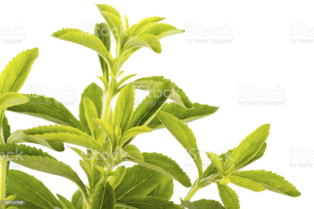 stevia - sweet herb royalty-free stock photo