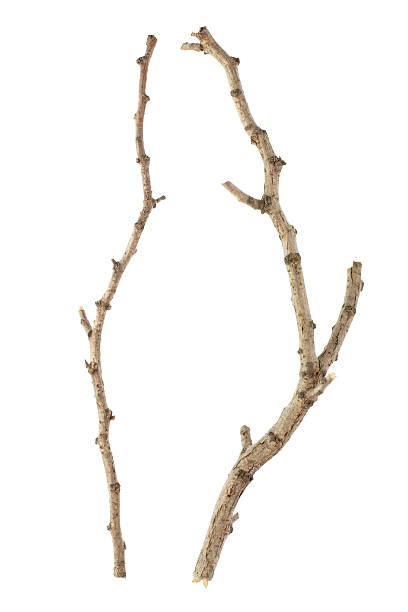 Stick Sticks isolated on white, clipping path included XXXL stick plant part stock pictures, royalty-free photos & images