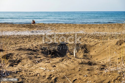 istock Stick sign on a place of sea turtle nest Alagadi beach Northern Cyprus 1091416096
