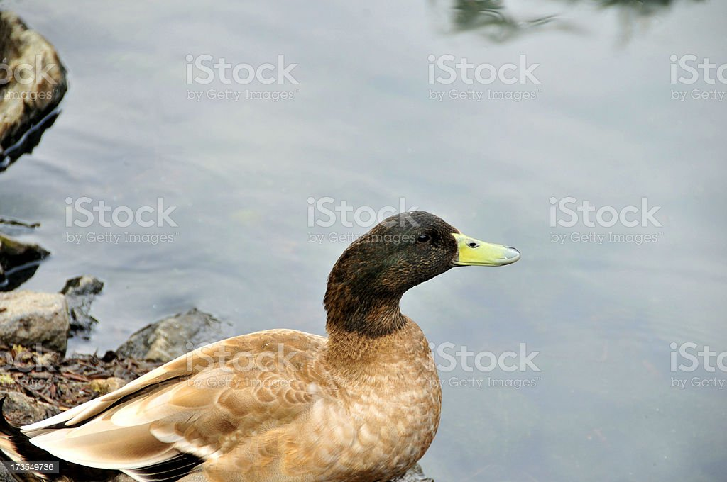 Stick Your Neck Out stock photo