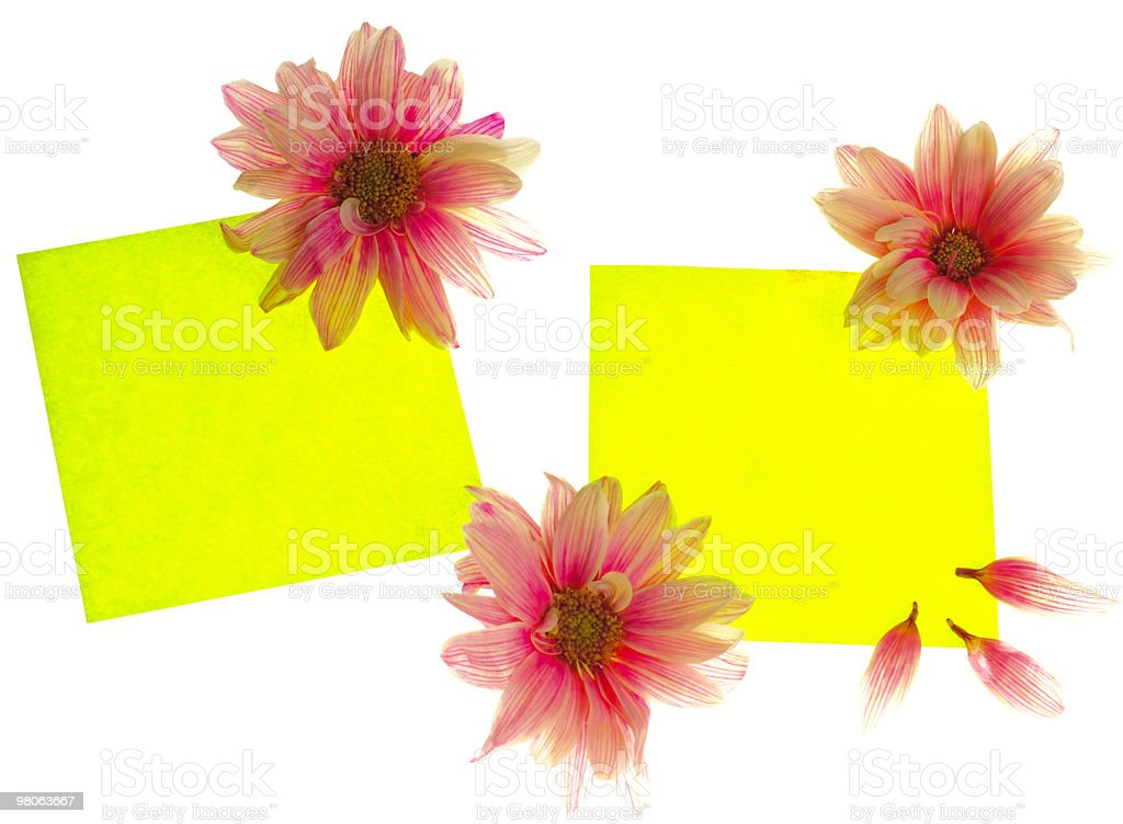 Stickers with flowers royalty-free stock photo