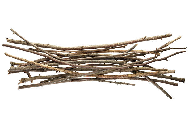 Sticks and twigs  bundle stock pictures, royalty-free photos & images