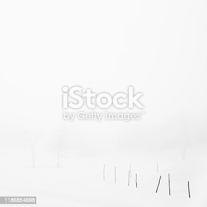 477312602istockphoto Sticks in a snow field on a foggy morning, Parma, Italy 1186854698