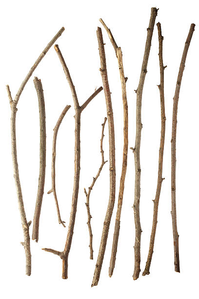 Sticks Sticks isolated on white background XXXL twig stock pictures, royalty-free photos & images